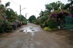 Thung Wua Laen009