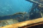 wooden wreck 032