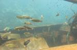 wooden wreck 033