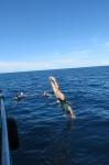 boat blog  045