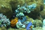 Komodo Dive Trip 13tunicates