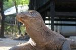 Komodo Dive Trip23