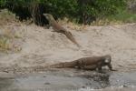 Komodo Dive Trip24