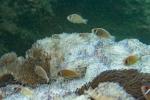 22 diving Jun II035